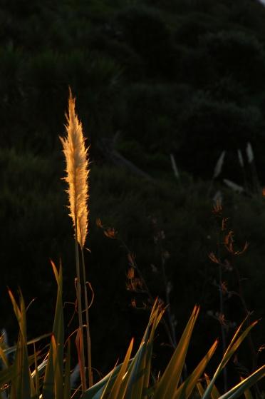 In the darknessAhipara, New Zealand