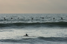 Pelicans are the best surfers.Canoa, Ecuador