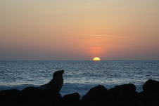 The sun never sets unwatched in the Galápagos
