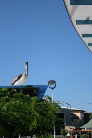 Keeping a watchful eye.Galápagos