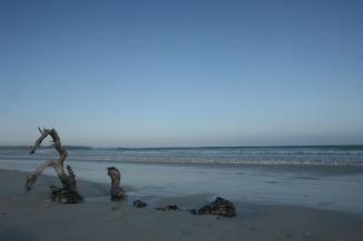 Sand dragons.Galápagos