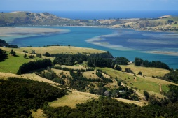 Dunedin estuary.New Zealand