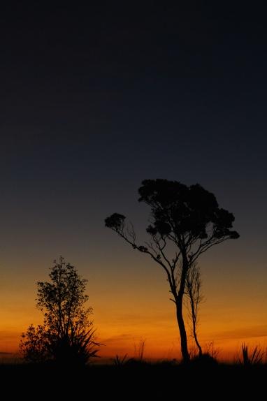 Weld Road.Taranaki, New Zealand