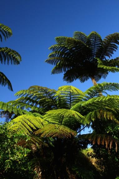 Jungle colour.Puketi Forest, New Zealand